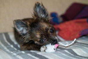jouet pour chien jouet pour chien maxi zoo jouet pour chien pas cher jouet pour chien indestructible jouet pour chien destructeur jouet anneau pour chien jouet eau pour chien boutique pour chien pas cher